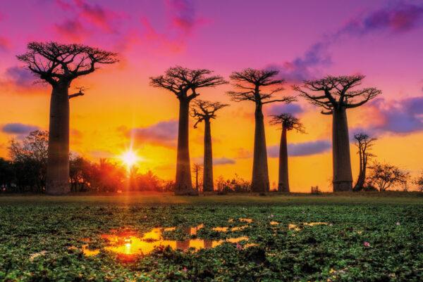 Madagascar cel mai mic continent al lumii