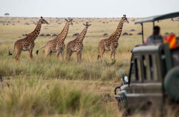 Botswana tara in care natura e la ea acasa